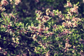 Blooming tree branch with pale pink flowers — Stock Photo