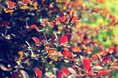 Red leaves on a tree — Stock Photo