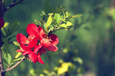 Branch with red flowers in a park — Stock Photo
