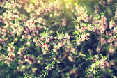 Sunlit blooming branches in spring — Stock Photo
