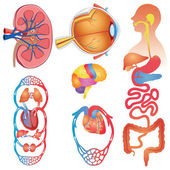 Human Body Parts Vector Set — Stock Vector