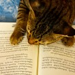 Lucky with book - not to play but to learn — Stock Photo