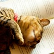 Lucky tiger-stripe cat napping on a book — Stock Photo