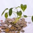 Green tree on money land — Stock Photo