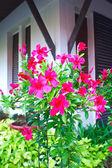 Beautiful red flowers — Stock Photo