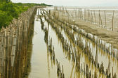 Bamboo dam and Mangrove farm — Stock Photo