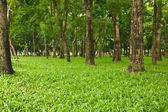 在一个晴朗的天绿色森林背景 — 图库照片