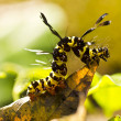 Brown arctia caja larva on leaf in nature — Stock Photo