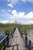 The bridge is surrounded by mangrove trees — Stock Photo