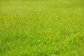 Fundo de grama verde — Fotografia Stock