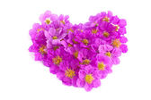 Heart shaped purple flowers on white background — Photo