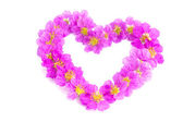 Heart shaped purple flowers on white background — Stock Photo