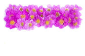 Pretty frame from purple flowers  — Stock Photo