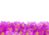 Pretty frame from purple flowers  — Stockfoto