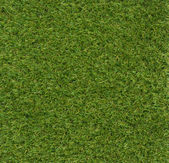 Green grass veers Square background — Foto Stock