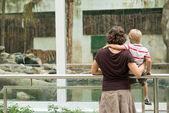 Находясь в зоопарке — Стоковое фото