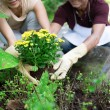Stock Photo: Cultivating in garden