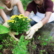 Cultivating in the garden — Stock Photo