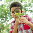 Little botanist — Stock Photo