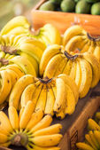 Ripe bananas variety — Stock Photo
