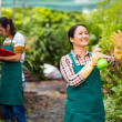 Work in the greenhouse — Stock Photo