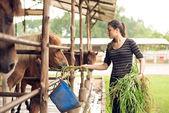 Girl feeding ponies — Stock Photo