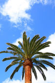Lonely palm tree — Stock Photo