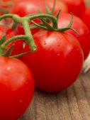 Cocktail tomatos — Stock Photo