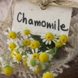 Chamomile herb - Stock Photo