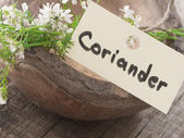 Coriander flower — Stock Photo