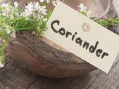 Coriander flower — Stock Photo