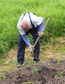 Senior man as a farmer — Stockfoto