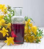 St john's wort oil — Stock Photo