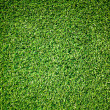 Close up Green grass texture background — Stock Photo