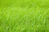 Green grass in field in daylight time — Stock Photo