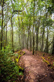 Pathway in forest of thailand  — Stock Photo