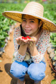 Asian girl harvesting strawberry in strawberry farm — Stock Photo