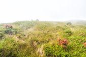 Campo de grama com névoa na montanha — Fotografia Stock