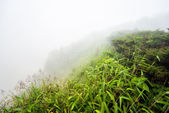 Field with misty on moutain — Stock Photo