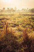 Grass field in morning — Foto Stock