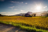 Sunset behind the mountains in the rice field — Stock Photo