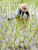 Thailand farmer — Stock Photo