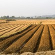 Agricultural fields — Foto de stock #40600339