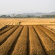 Stock Photo: Agricultural fields