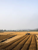 Agricultural fields — Stock Photo