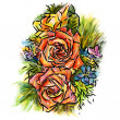 Stock Photo: Rose : colors-pencil sketchbook