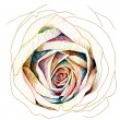 Rose : colors-pencil sketchbook — Stockfoto #40686931