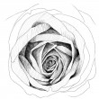 Rose : pencil sketchbook — Foto de stock #40687113