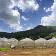 Location tomato cultivation — Stockfoto #41389287