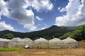 Location tomato cultivation — Stock Photo